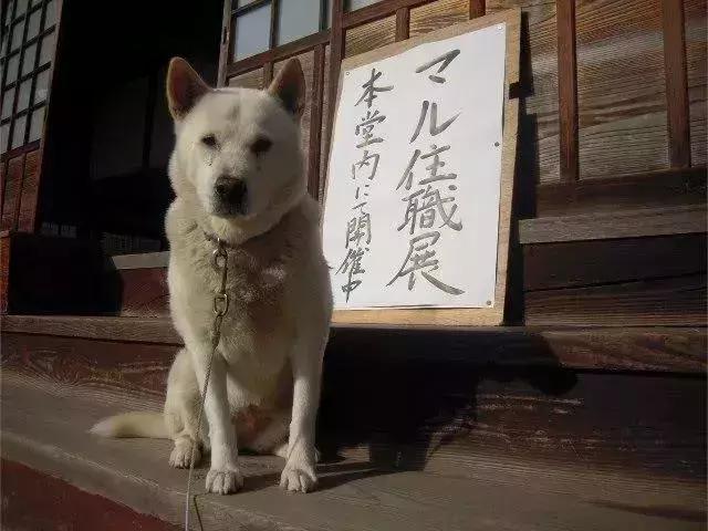 参禅打坐14年,这才是根正苗红的佛系狗狗